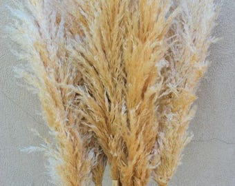 Dried Pampas Grass | Natural Pampas Grass | Wedding Decor |