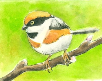 Black-throated bushtit  Original hand painted ACEO watercolor miniature art