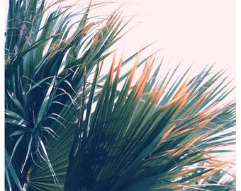 Nature Photograph- Palm Tree Print - Tropical Art - Travel Photograph - Fringe - Fine Art Print- California Print - Florida Art Print