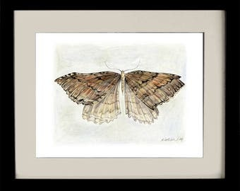 Moth I, fine art print, giclee, archival, nature, insects, natural history