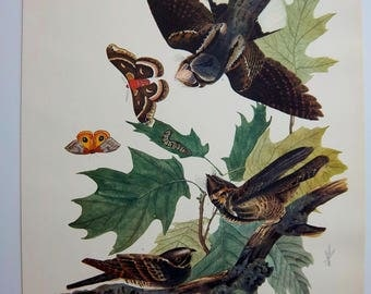 "VINTAGE 14 x 17 AUDUBON - ""Whippoorwill""  lithograph print VG condition"