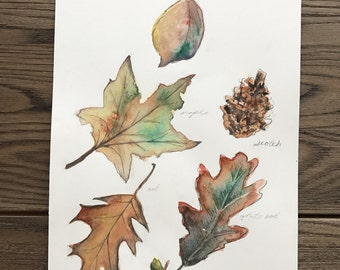 Autumn Leaf 8.5 X 11 Original Watercolor Art