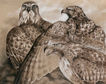 ORIGINAL Drawing - Three Red-Tails - Red Tailed Hawk Art - Wildlife Drawing