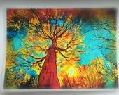 Night sky, aceo original, 2.50x3.50, Fine art photograph, Autumn trees, Fall decor,Nature decor #aceo #dahliahouseart #Ginasignore