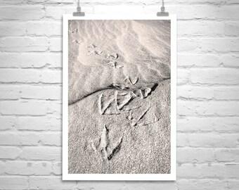 Sand Dune Photo, Bird Art, Pelicans, Animal Tracks, Beach Art, Nature Photography, Rocky Point, Mexico Photos, Puerto Penasco, Sea of Cortez