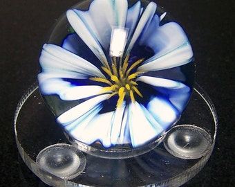 Realistic White and Blue Flower Glass Art Marble SRA - Collectable Lampwork Glass Marble