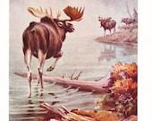 1930s Alaska Moose Deer Print -  Vintage Antique Animal Deer Hunting Man Cave Home Decor Book Plate Art Illustration for Framing