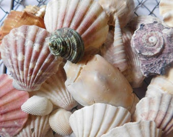 Sea Shells from Gulf of Mexico - Different Shapes and Sizes
