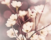 Nature Print, Flower Photograph, Dogwood Photography, Spring Art - Burgundy art, off white, botanical decor, earth tone, picture of blossoms