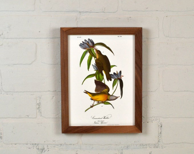 """Framed Audubon Bird Print """"Connecticut Warbler"""" Full Color Reproduction - Solid Natural Walnut Peewee Style - IN STOCK - Same Day Shipping"""