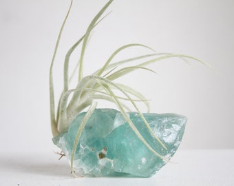 Raw Fluorite Crystal With Airplant, Sea Green Air Planter, Beachy Mermaid Decor, Seaside Cottage, Boho Beach House decor
