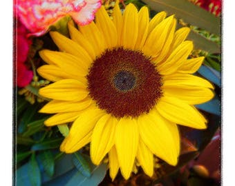 Sunflower at Market Nice, France Flower Photo Artistically Enhanced