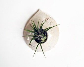 Ceramic Air Plant Holder - White Teardrop Shape - Pottery Wall Hanging Planter - Lauren Sumner Pottery - Gift for Plant Lovers