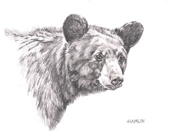 Black Bear Study - Open edition print of an original drawing (fits 11x14 frame)