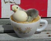 Taxidermy Silver Sebright Chick in Small Vintage Milk Glass Tea Cup. Jasmine.