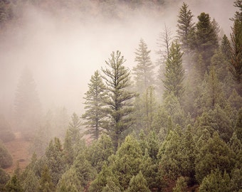 Pine Forest in the Fog | Mountain Forest Wall Art