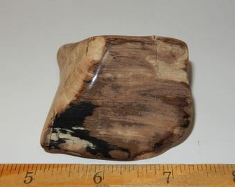 Petrified Wood - polished
