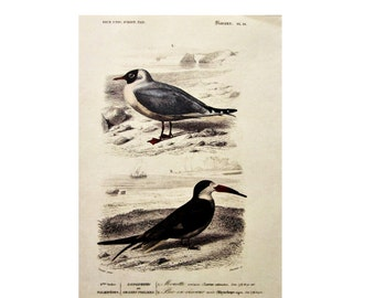 "Bird Botanical Print, 7.5"" x 10""/Antique Original Vintage French Bookplate/ Not Digital"