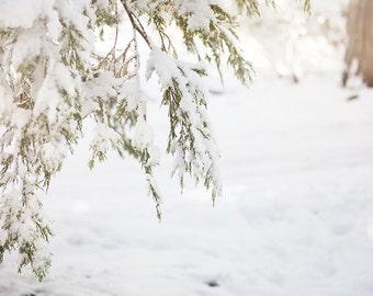 "Winter Wall Art, Snow, Winter Woodland, Whimsical, Snow Wall Art, Winter Photography, Snow Photograph, Winter Wonderland ""Snow Trees"""