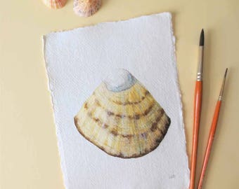 Original watercolour illustration limpet sea shell from the beach ocean series