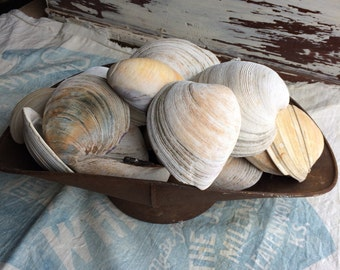 The Last Of Her Vintage Clam Shells
