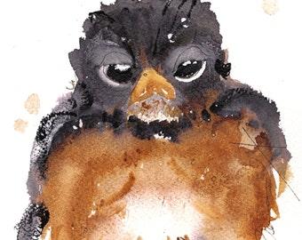 12 x 12 Bird Art, American Robin, Bird Art Print