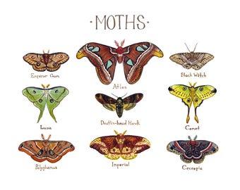 Moths Field Guide Art Print  / Watercolor Painting / Wall Art / Nature Print