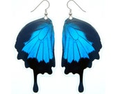 Papilio Ulysses Butterfly Wing Earrings