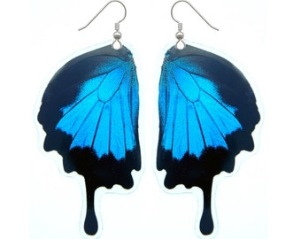 Papilio Ulysses Butterfly Wing Earrings