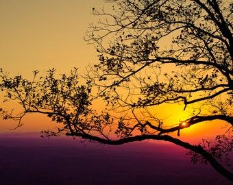 View from the Tree - Fine Art Print - Mount Cheaha - Alabama - Fine Art Print