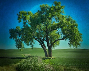 Printable Wall Art, Tree Photo, Tree Clipart, Digital Download, Printable Decor, Landscape Photo, Square Wall Art, Tree Art, Nature Art