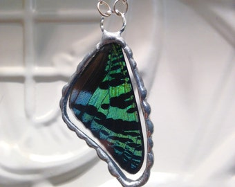 Real Butterfly Wing Pendant Madagascan Sunset Moth Between Glass Hand Soldered Great Christmas Gift  sterling silver chain