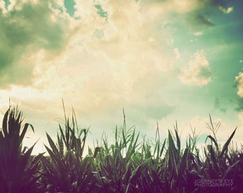 Country photograph, Midwest photography, Illinois print, corn field, nature photo, farm, country decor - Midwest Bounty
