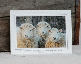 Five Assorted Greeting Cards, Sheep, Lambs, Custom, Recycled Paper, Soybean Ink,Fine Art Photo, Barb Lassa,