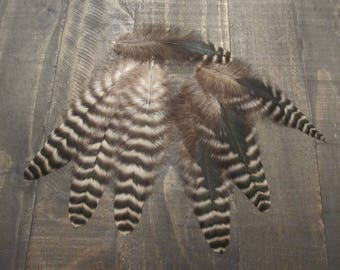 7 Black & Grey Rooster Tail Feathers with Green Bronze Coloring ~ Cruelty Free