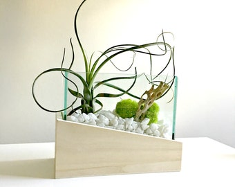 Medium air plant terrarium - glass vase Living decor DIY kit - gift for any occasion- zen decor- zen garden