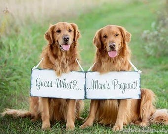 Custom Order for Michelle   Pregnancy Announcement   Expecting Signs   Pregancy Reveal photo props   big sister brother   dog signs   2pc