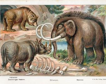 1890 color lithograph of Mammoth Cave Bear Rhinoceros Original print decorative art wall art Natural history