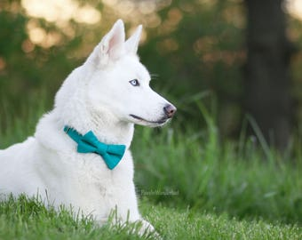 Dog of the Bride Wedding Collection Dog Collar and Bow Tie in Teal by Bullenbeisser Dog PLEASE READ Item Details before ordering.