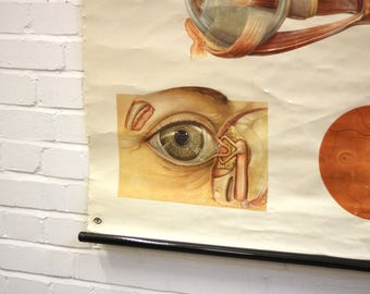 Mid Century Canvas Anatomical Chart Of The Eye Circa 1950's