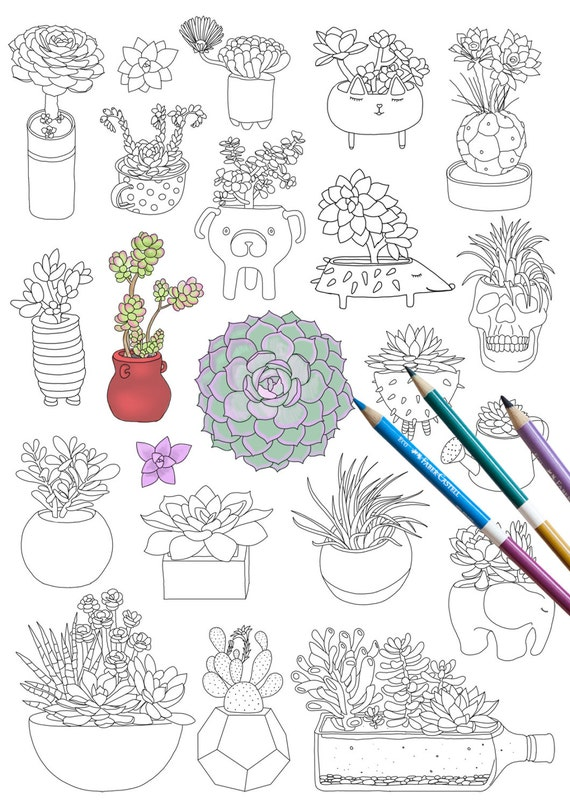 Succulents Coloring Page INSTANT DOWNLOAD Plants Adult Book Botanical Floral Flower Art For Therapy Cactus