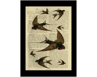 Swallows Flock Vintage Birds British Avarian - Dictionary Print Book Page Art