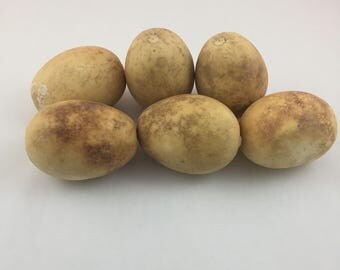 Natural Organic Egg Gourd Dried Cleaned Gourds Six  3 1/2 inch length  Lot 6