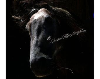 Smùid / Smoke /Fumée - Equine Fine Art Horse Photography - Cheval Etalon  Photographie d'Art