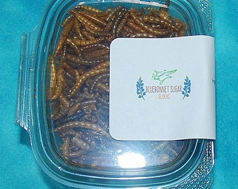Sugar Glider Treat- Freeze Dried Mealworms- 6 ounce Container