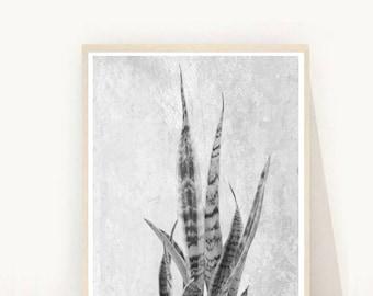 Succulent Print, Succulent Photo, Printable Art, Black and white, Minimalist Decor, Wall Decor, Instant Download
