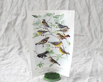 Bird Print Nº 93 | Birds of America