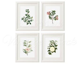 Botanical illustration Botanical print set, Plant print, Floral art Vintage Illustrations for Print 5x7, 8x10, 11x14 INSTANT DOWNLOAD 2369