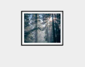 Forest, Forest print, forest photography, forest wall art, nature prints, nature photography, woodland decor, tree print, forest photo, tree