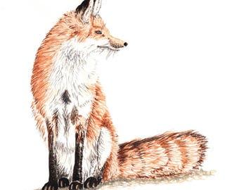 Sitting Fox Print - Mounted